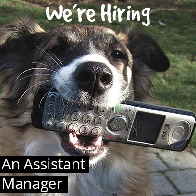 We're Hiring an Assistant Manager