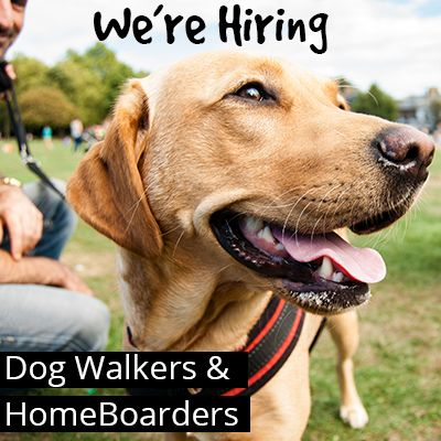 we're hiring Dog Walkers & Home boarders
