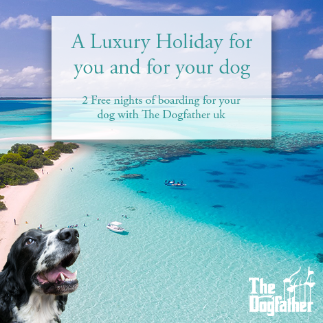 The Luxury travel boutique & Dogfather boarding offer